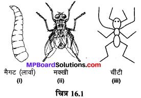 MP Board Class 6th Science Solutions Chapter 16 कचरा संग्रहण एवं निपटान 1