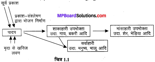 MP Board Class 7th Science Solutions Chapter 1 पादपों में पोषण 1