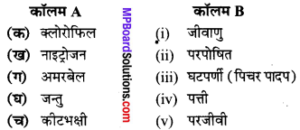 MP Board Class 7th Science Solutions Chapter 1 पादपों में पोषण 2