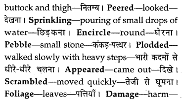 MP Board Class 8th Special English Chapter 12 The Cherry Tree 10