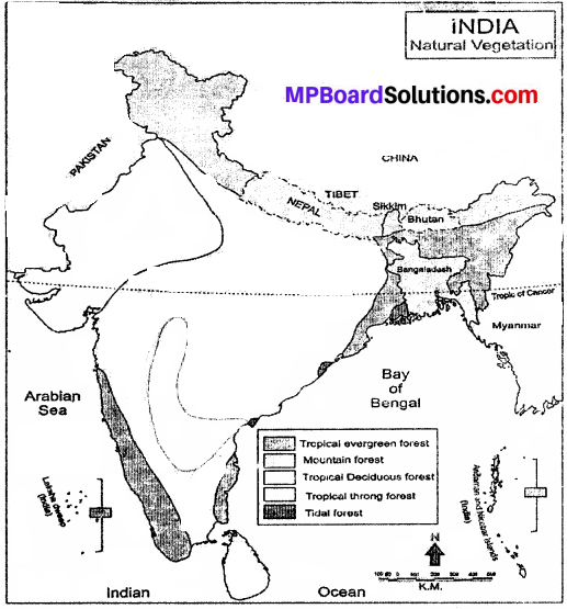 MP Board Class 9th Social Science Solutions Chapter 6 India Natural Vegetation and Wild Life - 1