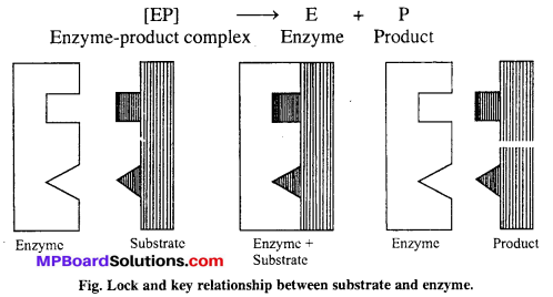 MP Board Class 12th Chemistry Solutions Chapter 5 Surface Chemistry 6