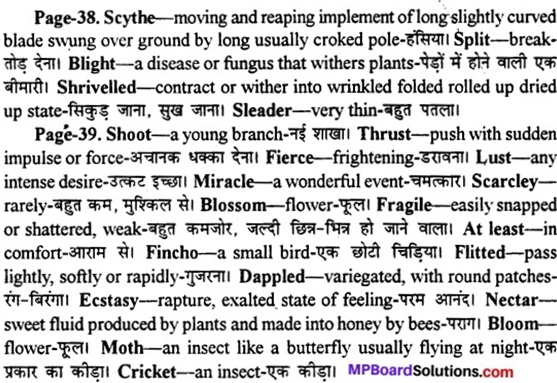 MP Board Class 11th English A Voyage Solutions Chapter 6 Cherry Tree 1