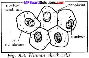 Mp Board Class 8 Social Science Solution Chapter 8