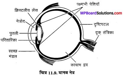 MP Board Class 10th Science Solutions Chapter 11 मानव नेत्र एवं रंगबिरंगा संसार 16