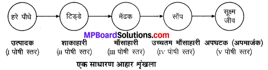 MP Board Class 10th Science Solutions Chapter 15 हमारा पर्यावरण 1