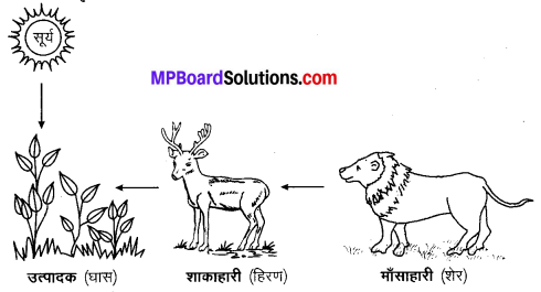 MP Board Class 10th Science Solutions Chapter 15 हमारा पर्यावरण 6