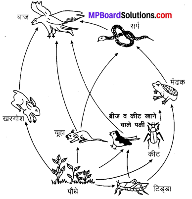 MP Board Class 10th Science Solutions Chapter 15 हमारा पर्यावरण 7