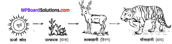 MP Board Class 10th Science Solutions Chapter 15 हमारा पर्यावरण 8