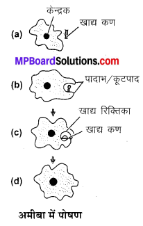 MP Board Class 10th Science Solutions Chapter 6 जैव प्रक्रम 12