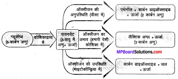 MP Board Class 10th Science Solutions Chapter 6 जैव प्रक्रम 14