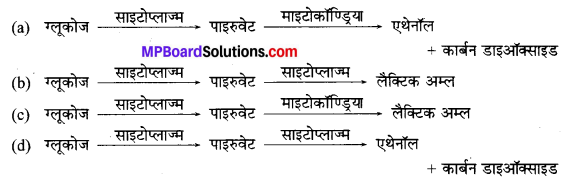 MP Board Class 10th Science Solutions Chapter 6 जैव प्रक्रम 3