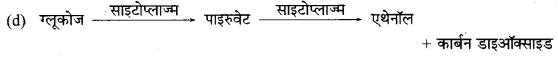 MP Board Class 10th Science Solutions Chapter 6 जैव प्रक्रम 4