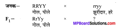 MP Board Class 10th Science Solutions Chapter 9 अनुवांशिकता एवं जैव विकास 5