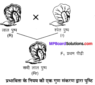MP Board Class 10th Science Solutions Chapter 9 अनुवांशिकता एवं जैव विकास 6