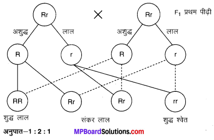 MP Board Class 10th Science Solutions Chapter 9 अनुवांशिकता एवं जैव विकास 7