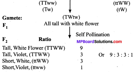 MP Board Class 10th Science Solutions Chapter 9 Heredity and Evolution 5