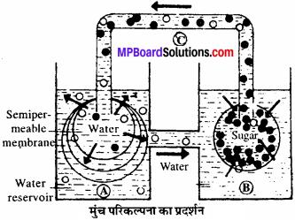 MP Board Class 11th Biology Solutions Chapter 11 पौधों में परिवहन - 5
