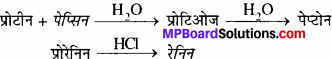 MP Board Class 11th Biology Solutions Chapter 16 पाचन एवं अवशोषण - 4