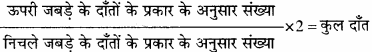 MP Board Class 11th Biology Solutions Chapter 16 पाचन एवं अवशोषण - 5