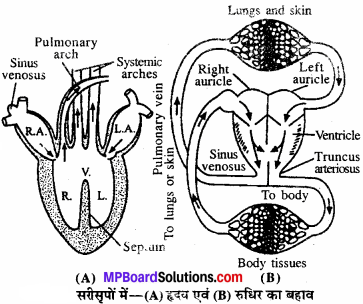 MP Board Class 11th Biology Solutions Chapter 18 शरीर द्रव तथा परिसंचरण - 6