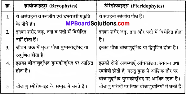 MP Board Class 11th Biology Solutions Chapter 3 वनस्पति जगत - 11