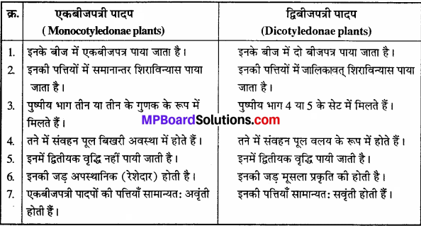 MP Board Class 11th Biology Solutions Chapter 3 वनस्पति जगत - 3