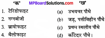 MP Board Class 11th Biology Solutions Chapter 3 वनस्पति जगत - 5
