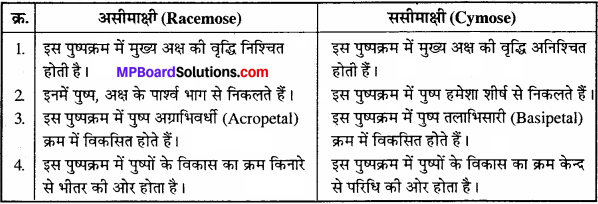 MP Board Class 11th Biology Solutions Chapter 5 पुष्पी पादपों की आकारिकी - 1