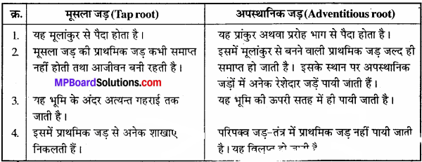 MP Board Class 11th Biology Solutions Chapter 5 पुष्पी पादपों की आकारिकी - 2