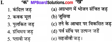 MP Board Class 11th Biology Solutions Chapter 5 पुष्पी पादपों की आकारिकी - 22