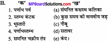 MP Board Class 11th Biology Solutions Chapter 5 पुष्पी पादपों की आकारिकी - 23