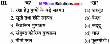 MP Board Class 11th Biology Solutions Chapter 5 पुष्पी पादपों की आकारिकी - 24