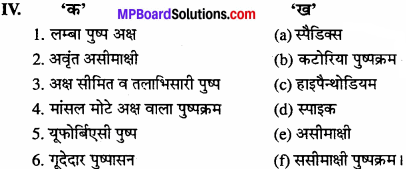 MP Board Class 11th Biology Solutions Chapter 5 पुष्पी पादपों की आकारिकी - 26