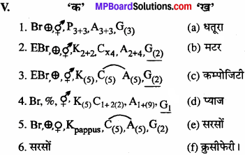 MP Board Class 11th Biology Solutions Chapter 5 पुष्पी पादपों की आकारिकी - 27
