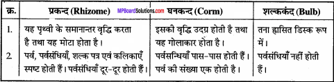 MP Board Class 11th Biology Solutions Chapter 5 पुष्पी पादपों की आकारिकी - 28