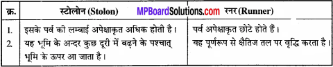 MP Board Class 11th Biology Solutions Chapter 5 पुष्पी पादपों की आकारिकी - 29