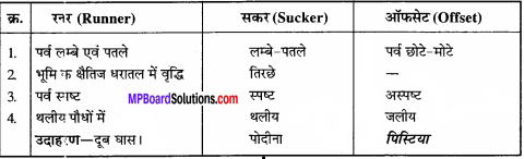 MP Board Class 11th Biology Solutions Chapter 5 पुष्पी पादपों की आकारिकी - 30