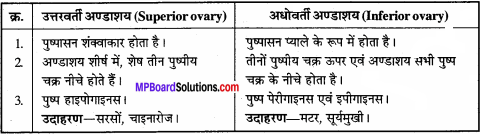MP Board Class 11th Biology Solutions Chapter 5 पुष्पी पादपों की आकारिकी - 32