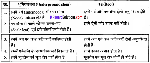 MP Board Class 11th Biology Solutions Chapter 5 पुष्पी पादपों की आकारिकी - 33
