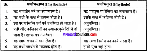MP Board Class 11th Biology Solutions Chapter 5 पुष्पी पादपों की आकारिकी - 34