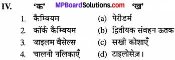 MP Board Class 11th Biology Solutions Chapter 6 पुष्पी पादपों का शारीर - 17