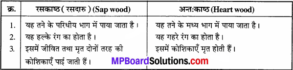 MP Board Class 11th Biology Solutions Chapter 6 पुष्पी पादपों का शारीर - 5