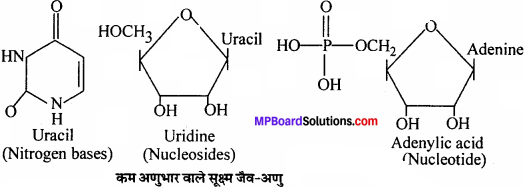 MP Board Class 11th Biology Solutions Chapter 9 जैव अणु - 11