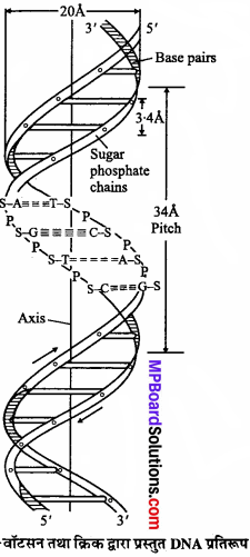 MP Board Class 11th Biology Solutions Chapter 9 जैव अणु - 22