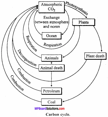 MP Board Class 12th Biology Important Questions Chapter 14 Ecosystem 11