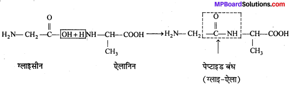 MP Board Class 12th Chemistry Solutions Chapter 14 जैव-अणु - 11