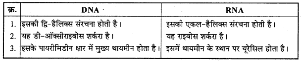 MP Board Class 12th Chemistry Solutions Chapter 14 जैव-अणु - 16