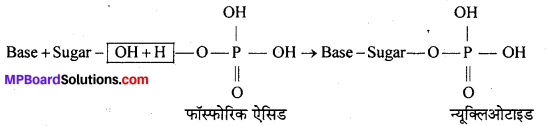 MP Board Class 12th Chemistry Solutions Chapter 14 जैव-अणु - 23