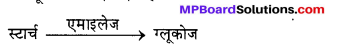 MP Board Class 12th Chemistry Solutions Chapter 14 जैव-अणु - 26